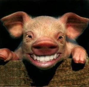 pig_smiling